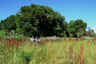 Iniciando la regeneración: La creación de una pradera