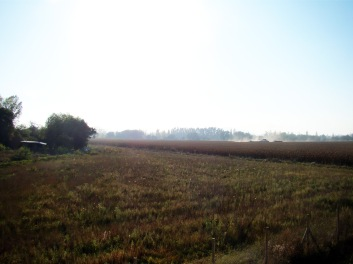 Monocultivo de maíz contrastando con pradera de Huelemu