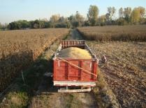 Camión llevándose el maíz, liberando el humedal