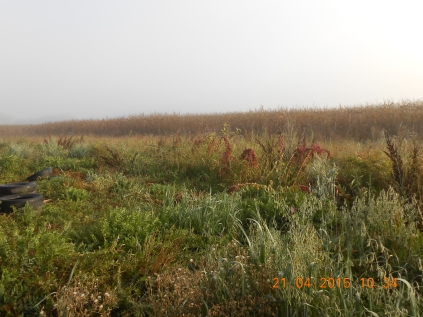 Diversidad de la pradera v/s monocultivo de maíz