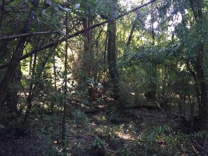 Selva maulina en el achibueno