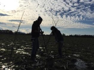 Plantando en el pantano